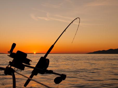 Fishing for fish
