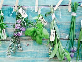 Atelier découverte sur la reconnaissance botanique - samedi 22 avril - 14h00