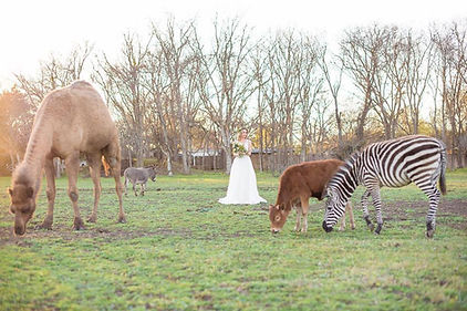 Photo Shoot Locations In Austin With Exotic Animal