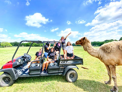 Things To Do In Austin Texas. Private Exotic Animal Tour