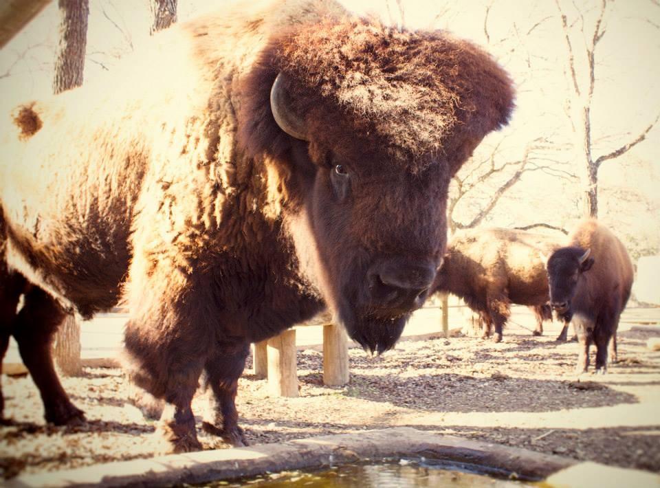 Big Ben Buffalo