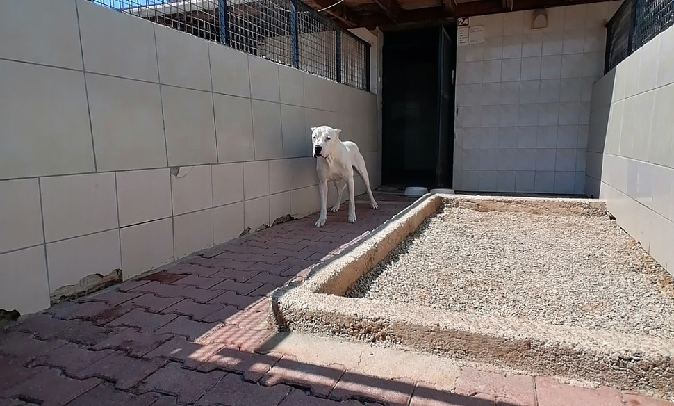 Köpek oteli