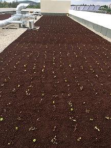 Plantation de micromottes