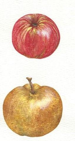 Apples11.jpg