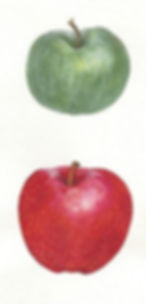 Apples10.jpg