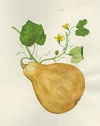 Gourd (Pumpkin Gourd).jpg
