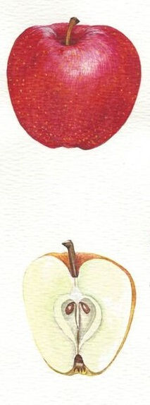 Apples12.jpg