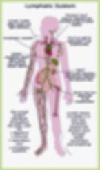 lymphatic system, lymph nodes, energize holistically