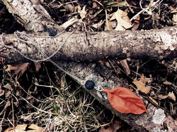 terra cotta leaf