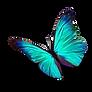 Papillon Bleu Clair PNG.png