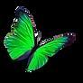Papillon Vert 2 PNG.png