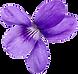 sweet_violet.png