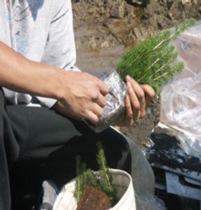 tree_planting_3.jpg