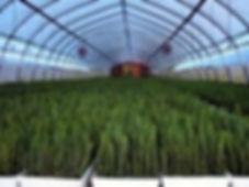 ResizedImageWzI2NiwyMDBd-nursery1.jpg