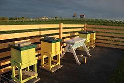 Bee Observation.JPG