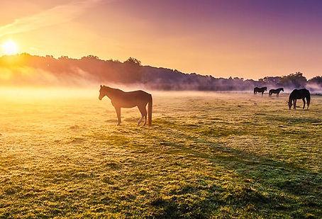 HorseApartFromHerd-iStock.jpeg