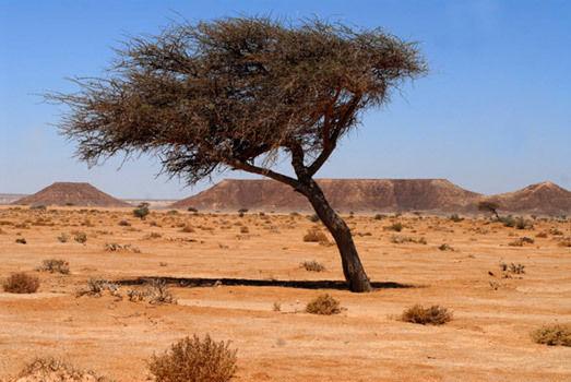 Sahara Desert Wix Com