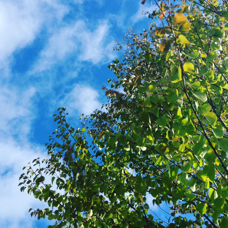 木々と太陽の光