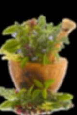 holistic herbal medicine