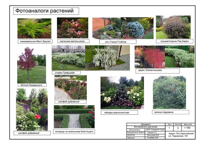 4. фотоаналоги.jpg