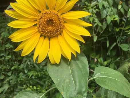 黄色い花集合!