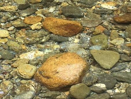 川魚と親しむ香肌峡