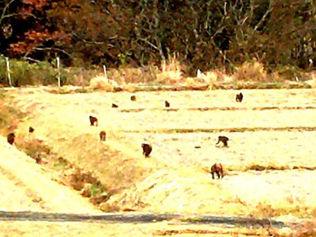 亀成園を取り囲む獣たち