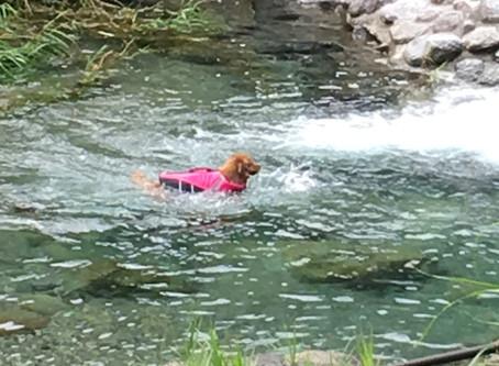山の犬、川の犬