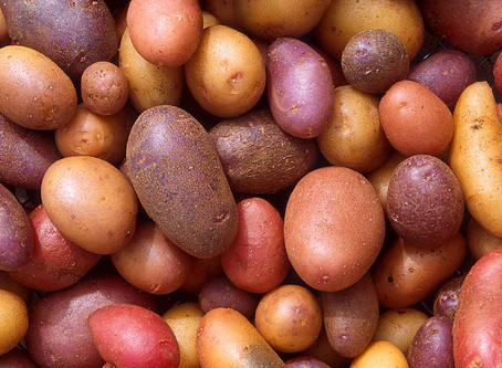 How I DID a MARY'S MINI potato cleanse: Part 1
