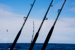 Fishing St. Croix - Deep Sea Island Charters