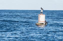 Fishing St. Croix - Deep Sea Island Charters-11