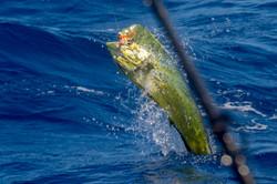Fishing St. Croix - Deep Sea Island Charters-25