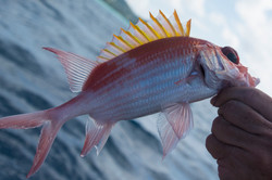 Fishing St. Croix - Deep Sea Island Charters-43