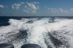 Fishing St. Croix - Deep Sea Island Charters-7