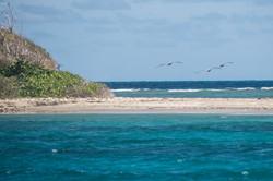 Fishing St. Croix - Deep Sea Island Charters-46