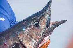 Fishing St. Croix - Deep Sea Island Charters-21