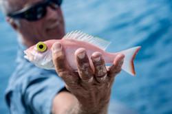 Fishing St. Croix - Deep Sea Island Charters-10