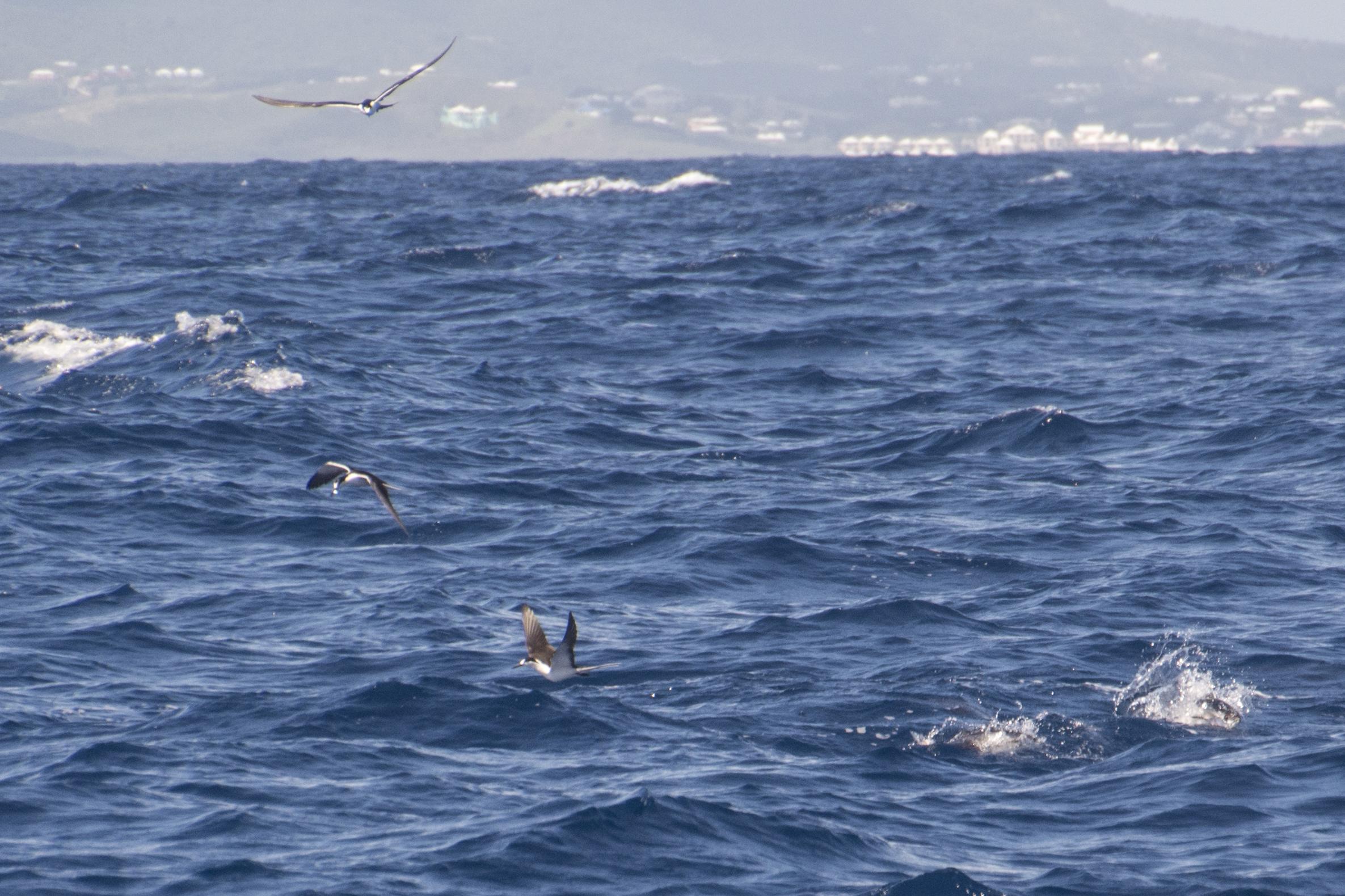 Fishing St. Croix - Deep Sea Island Charters-16