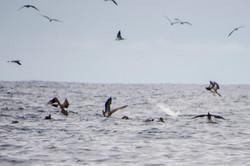 Fishing St. Croix - Deep Sea Island Charters-59