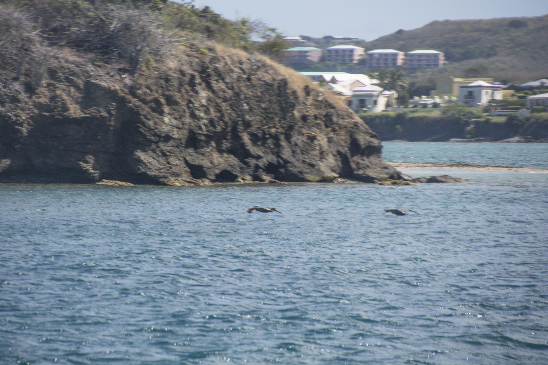 Fishing St. Croix - Deep Sea Island Charters-51