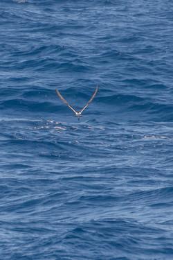 Fishing St. Croix - Deep Sea Island Charters-17