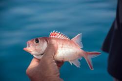 Fishing St. Croix - Deep Sea Island Charters-37