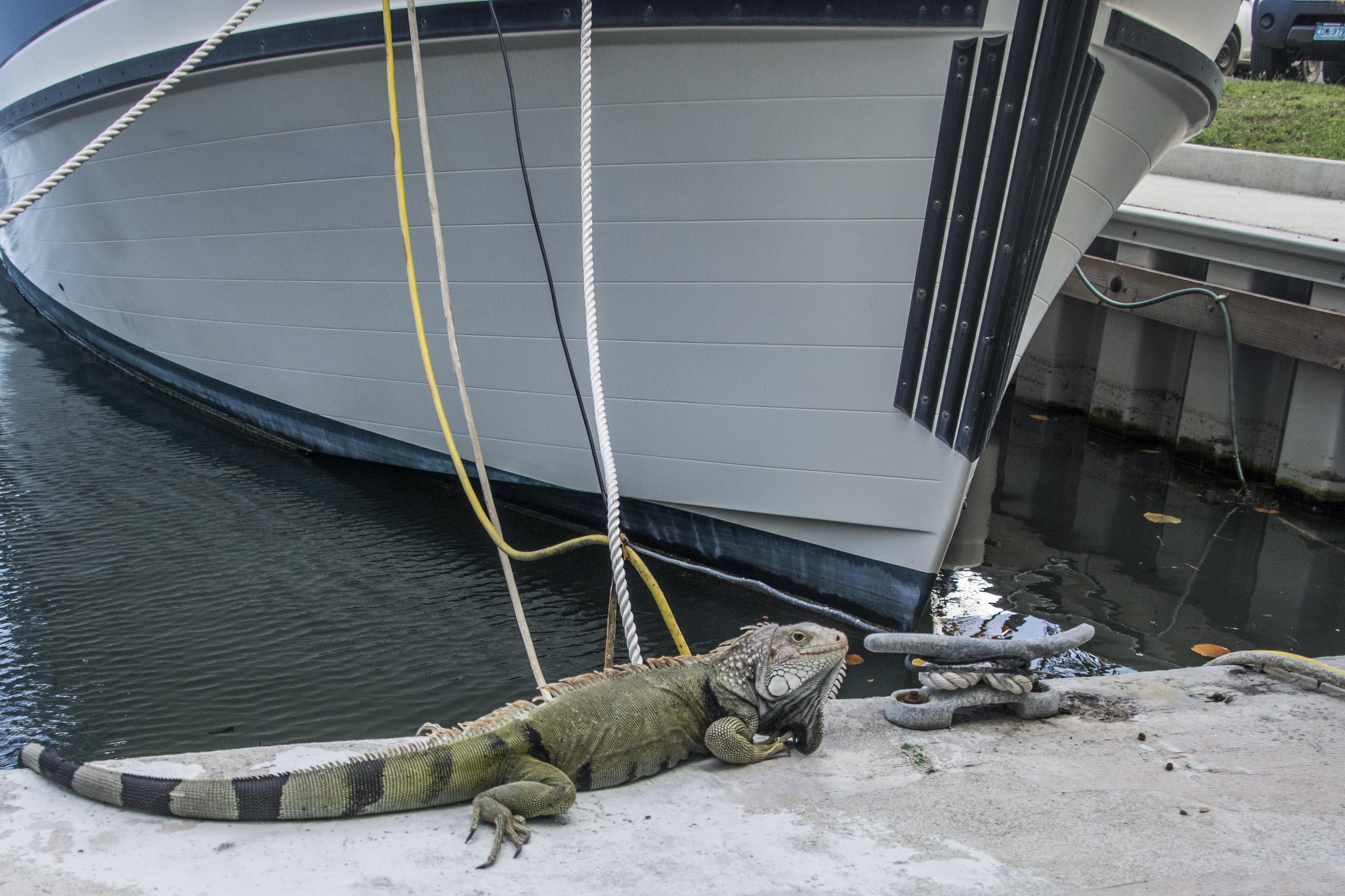 Gaurding the dock