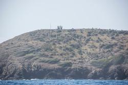 Fishing St. Croix - Deep Sea Island Charters-42