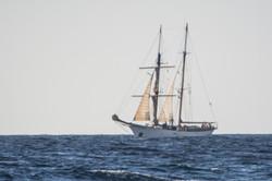 Fishing St. Croix - Deep Sea Island Charters-54
