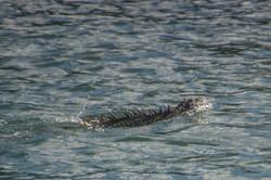 Fishing St. Croix - Deep Sea Island Charters-38