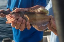 Fishing St. Croix - Deep Sea Island Charters-8