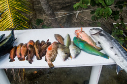 Fishing St. Croix - Deep Sea Island Charters-26