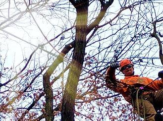Climber Pruning