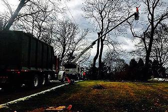 Arborist pruning from crane